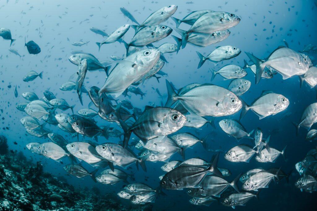 vissentijdperk