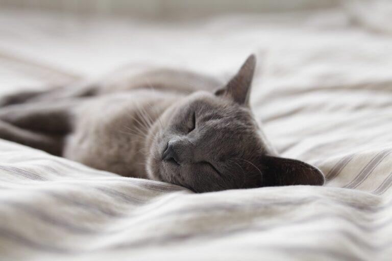 het belang van slaap
